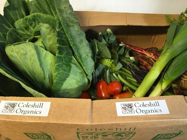 Large Organic Veg Box
