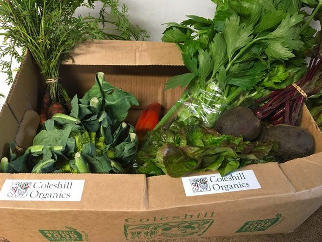 Medium Organic Veg Box