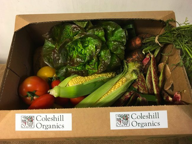 Small Organic Veg Box