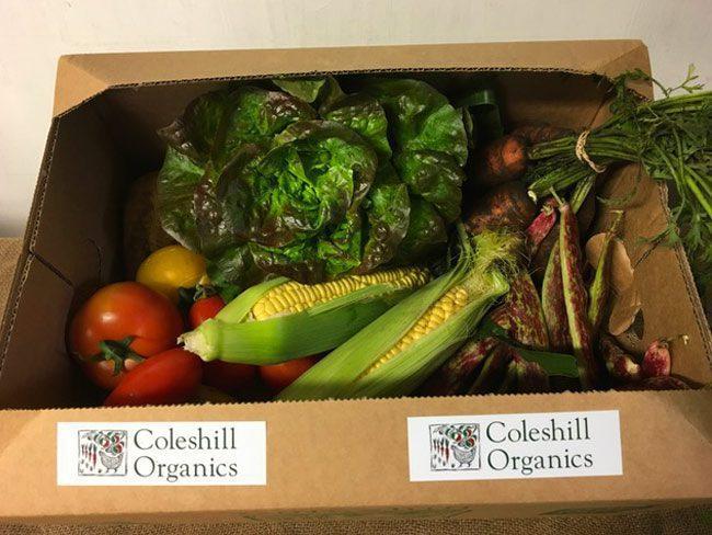Small Organic Veg Box