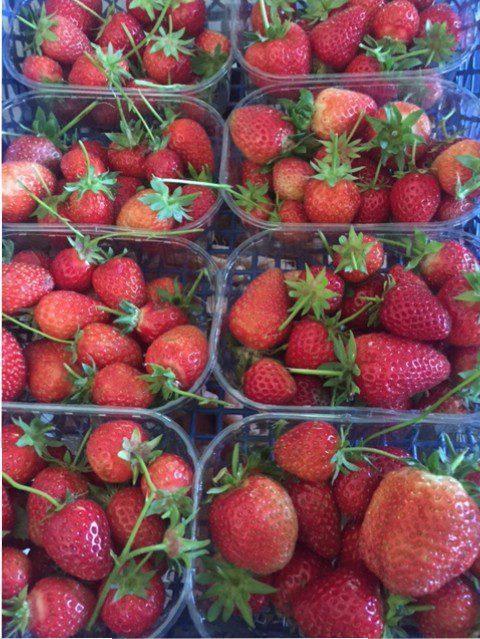 Organic strawberry punnets